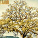 """2018-09-30,  """"Parable of The Mustard Seed"""""""